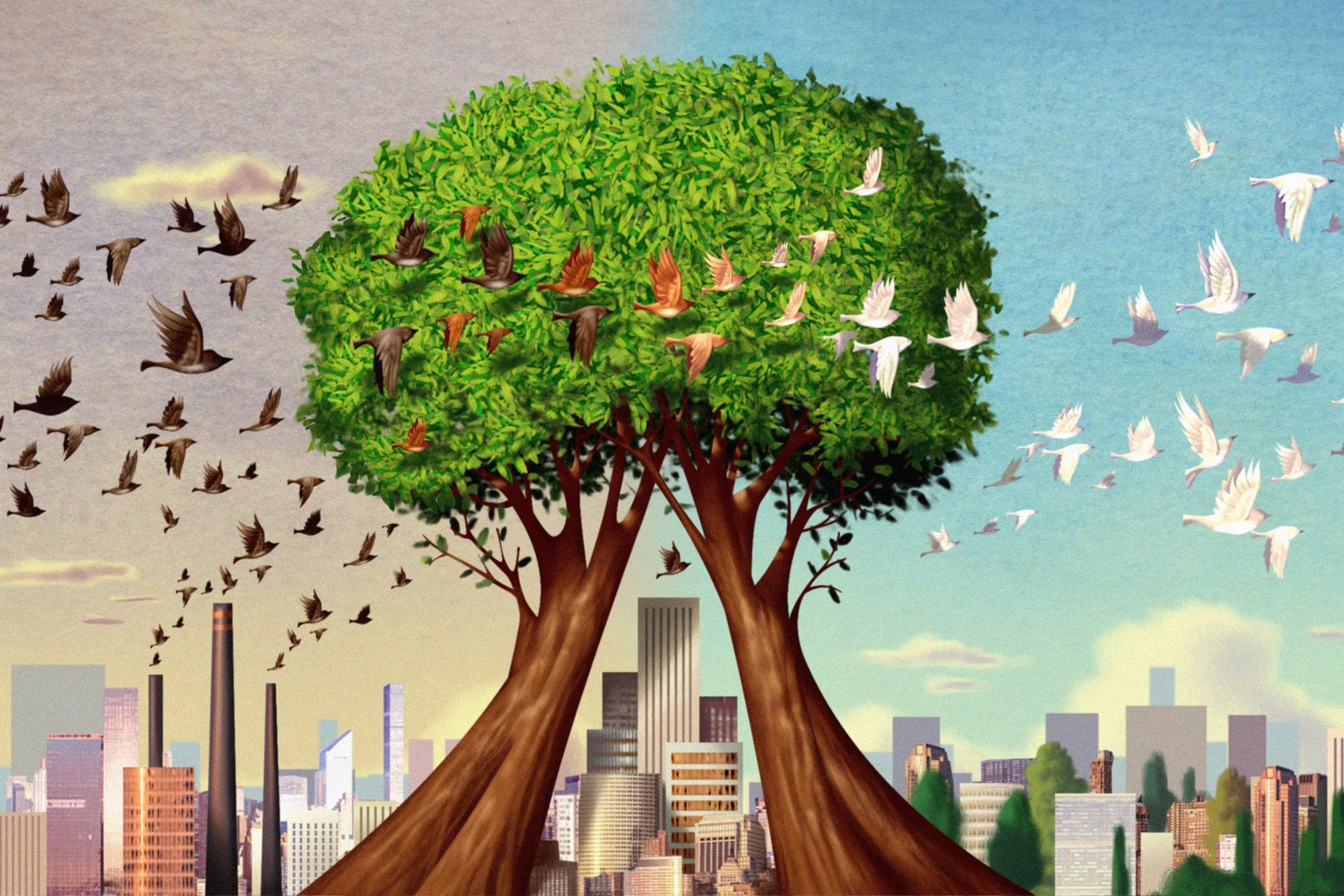 How Do Trees Clean Our Air Feature Rsc Education